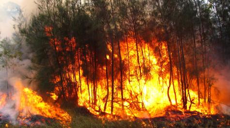 Bushfires in Australia destroy wildlife and residential areas