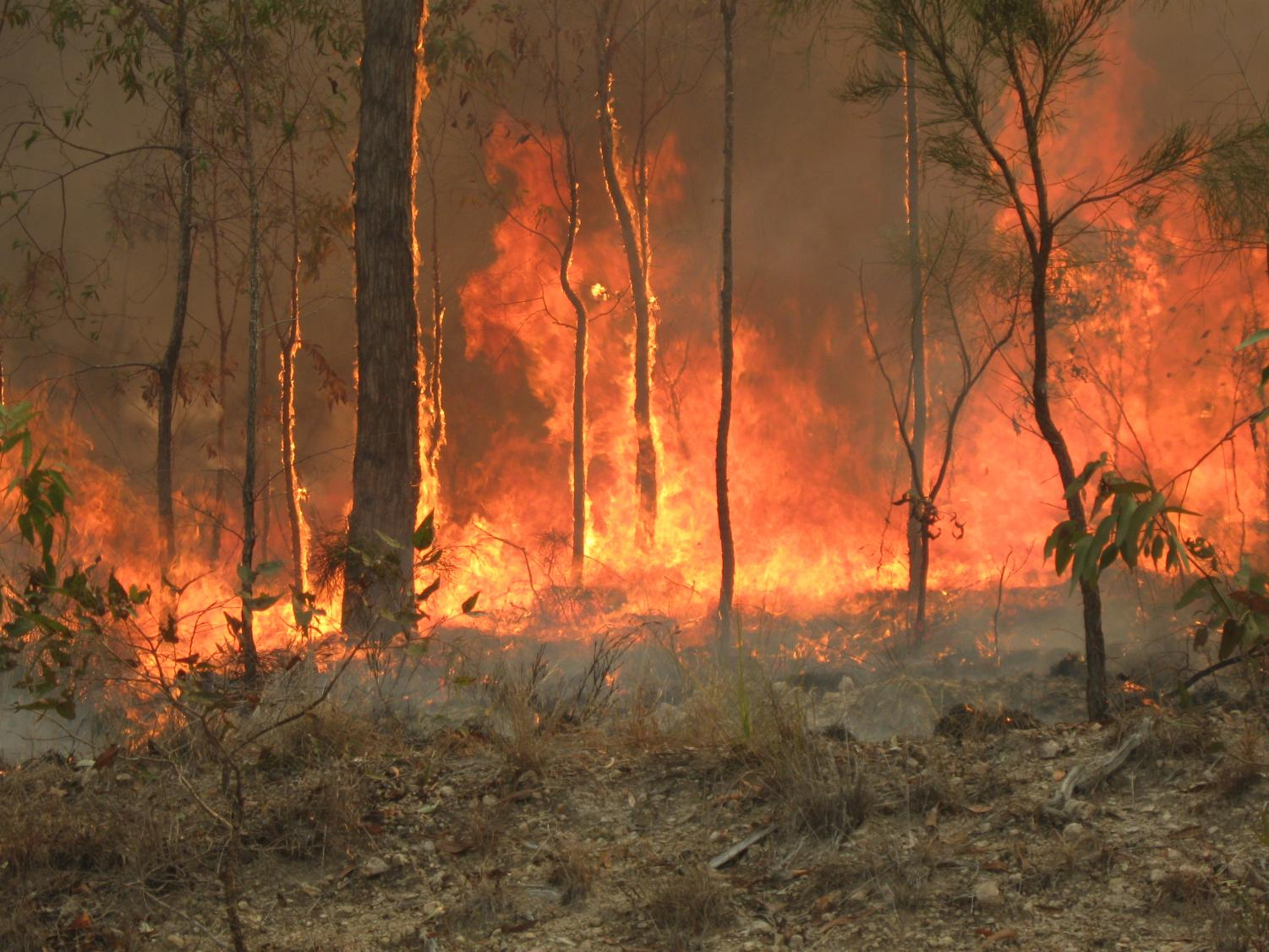 News has recently broke about the bush fires that are ablaze across Australia. The fires are destroying homes, displacing people, and killing wildlife. Action must be taken to put a stop to this devastation.